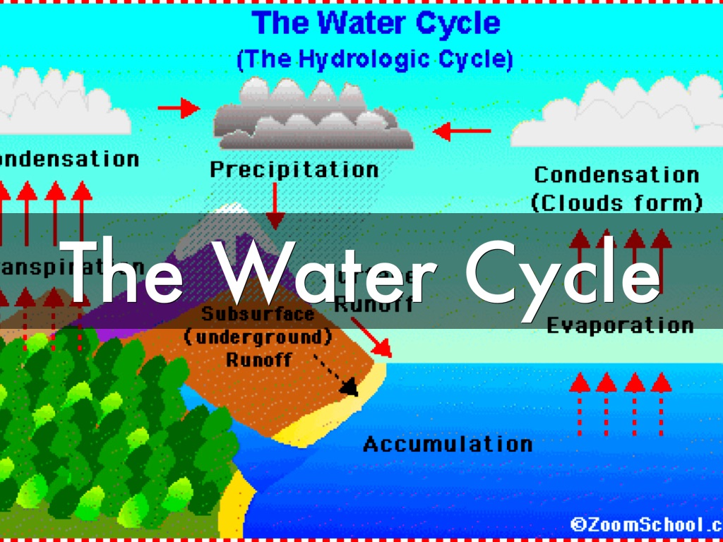 water cycle diagram with explanation chinese atv wiring 90cc the by tina evsns