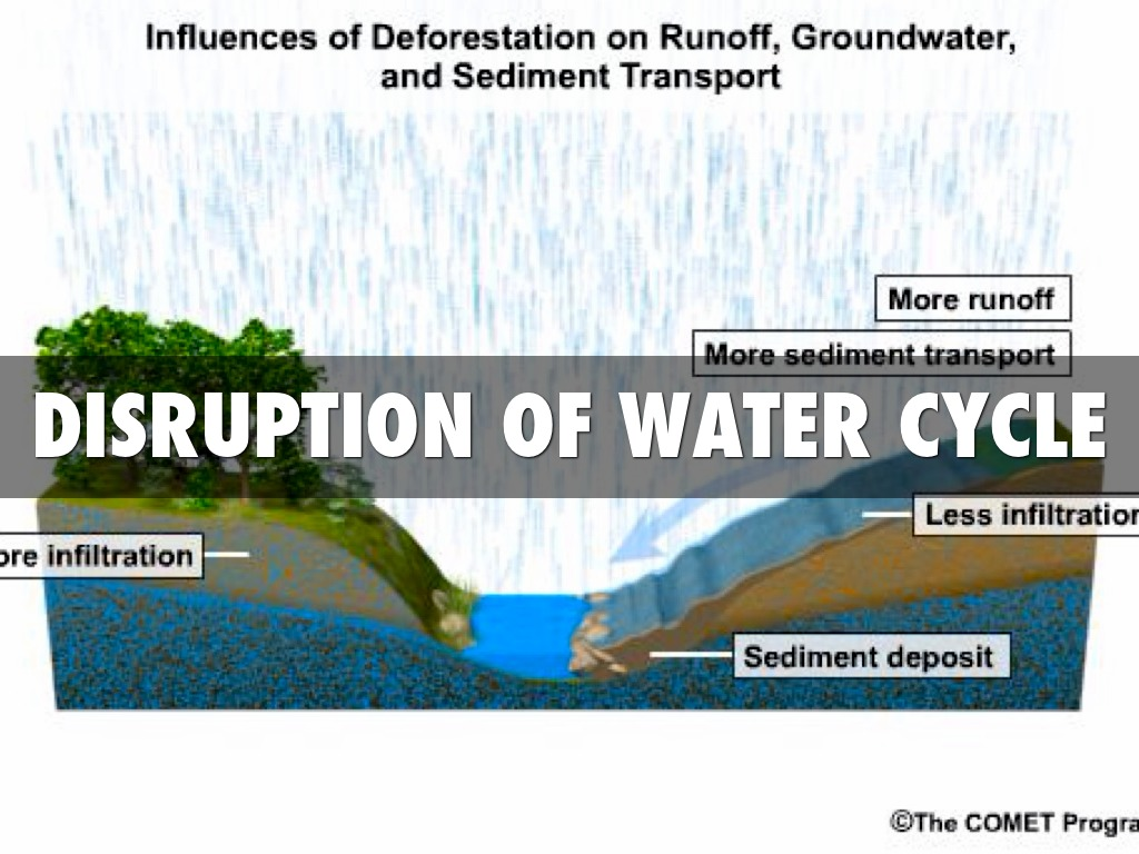 How Does Deforestation Affect The Water Cycle