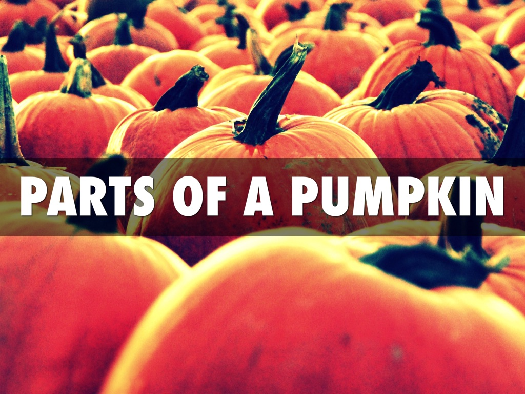 The Parts Of A Pumpkin By Whittney Maxwell