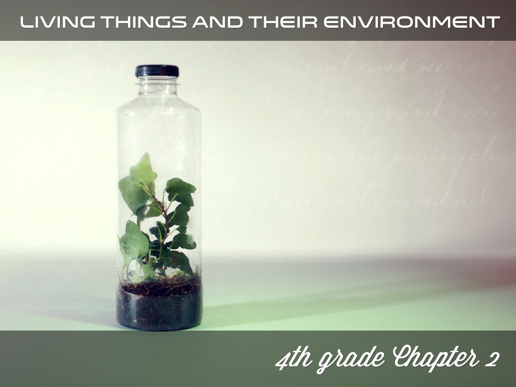 4th U2 Living Things And Their Environment By Mrs