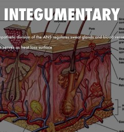 integumentary and nervous system [ 1024 x 768 Pixel ]