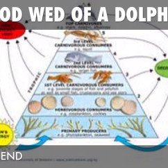 Ocean Food Chain Diagram Copyright Architectural Drawings And Hector Dolphin By Jordan Dellaquila