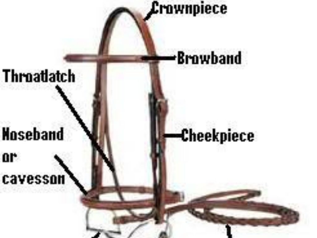 How To Assemble An English Bridle By Lpiantadosi1