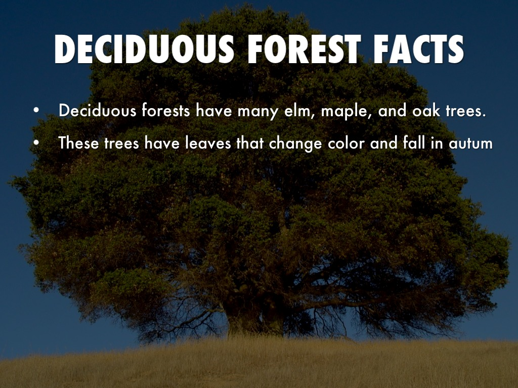 Temperate Forest Facts For Kids
