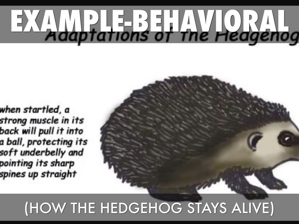 Animal Adaptations By Rachael Smith