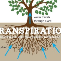 Flower Transpiration Diagram What Is Net Architecture With Water Cycle Terms By Stodpark0019