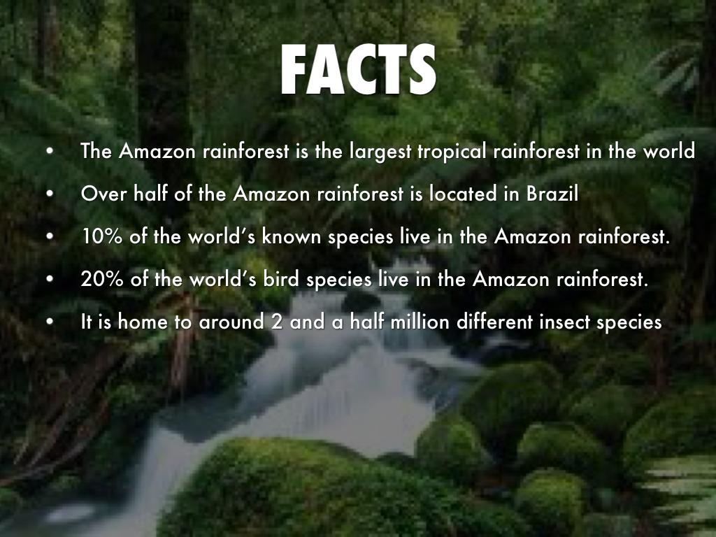 Amazon Rainforest By Jennifer Arreola
