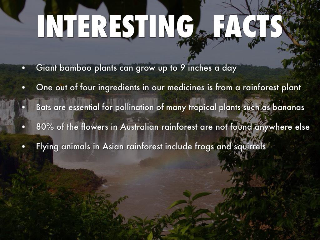 Rainforest Biome Description Tropical Rainforest Biome