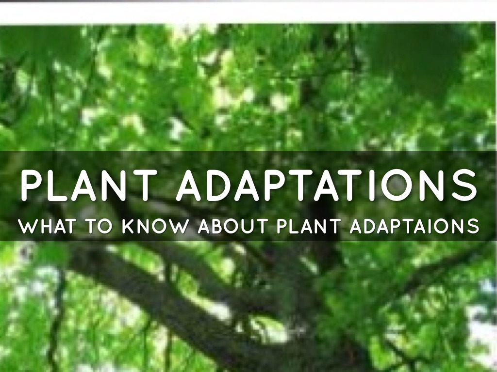 Plant Adaptations By Amy Davis
