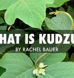 what is kudzu  [ 1024 x 768 Pixel ]