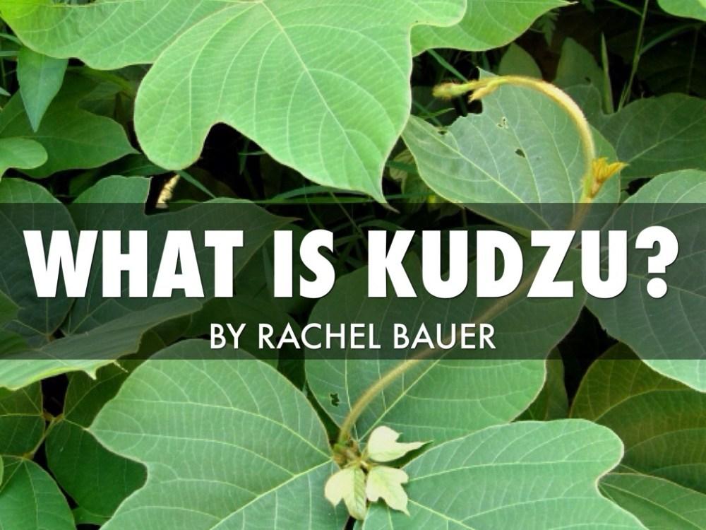 medium resolution of what is kudzu