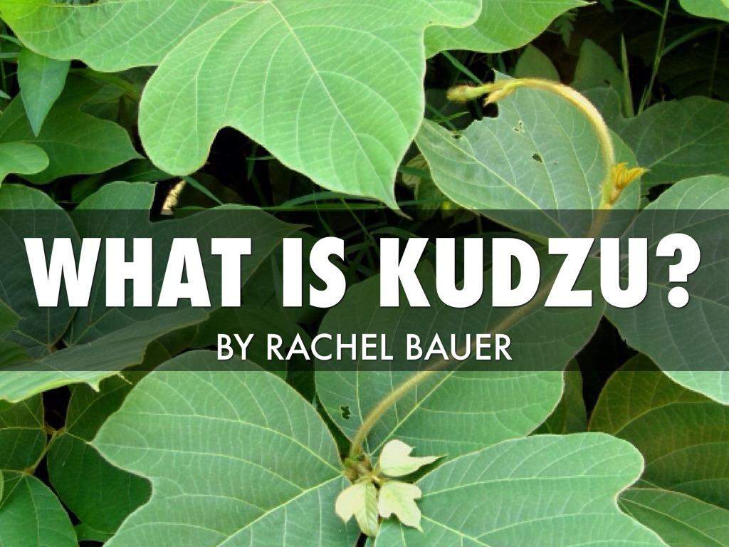hight resolution of what is kudzu