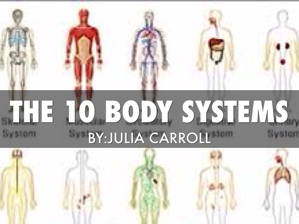 10bodysystems By Julia Carroll