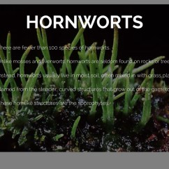 Horsetail Plant Diagram 2010 Hilux Spotlight Wiring Plants By Lily Parker 6