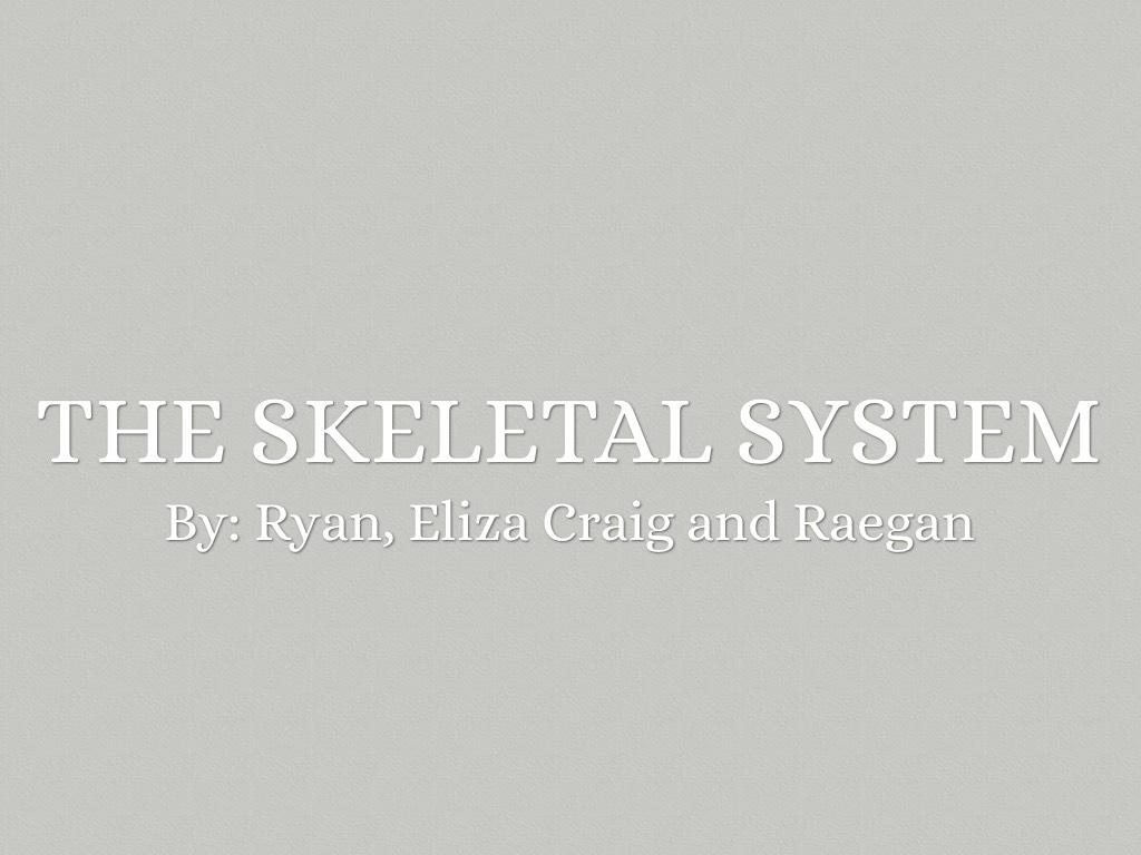 Skeletal System by Ryan Agan