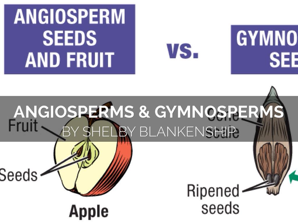 Angiosperm And Gymnosperms By Blan