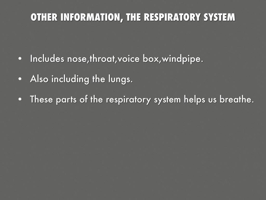 The Reproductive System By Noelia Velasquez