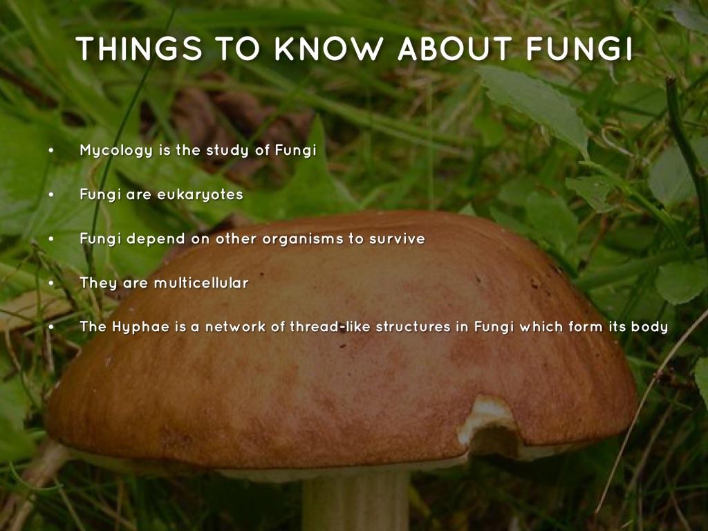 Protista And Fungi Kingdoms By Deshawnr Mingo