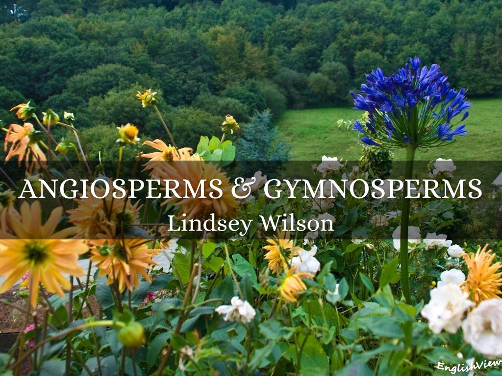 Angiosperms Amp Gymnosperms By Lindsey Wilson