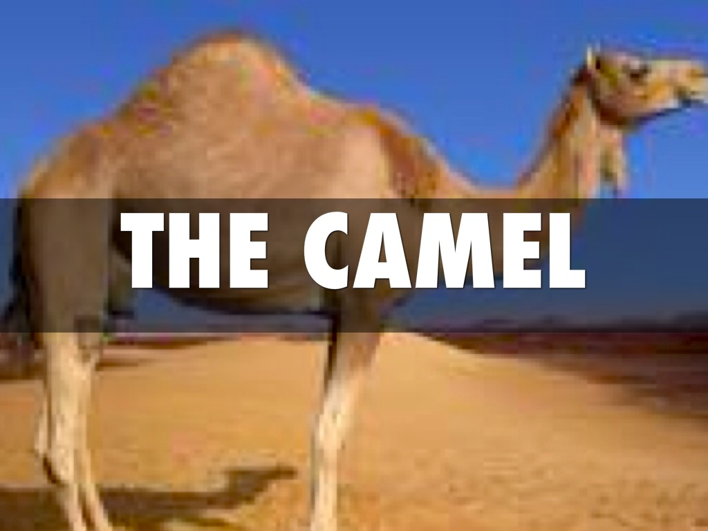 Camel Adaptation Worksheet