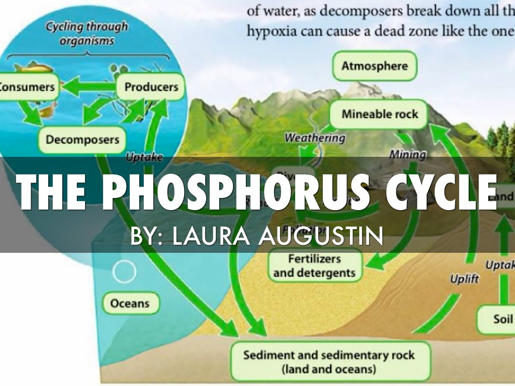 hight resolution of the phosphorus cycle