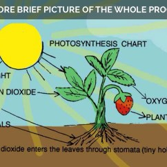 Photosynthesis And Cellular Respiration Cycle Diagram Pioneer Radio Manual Images Reverse Search