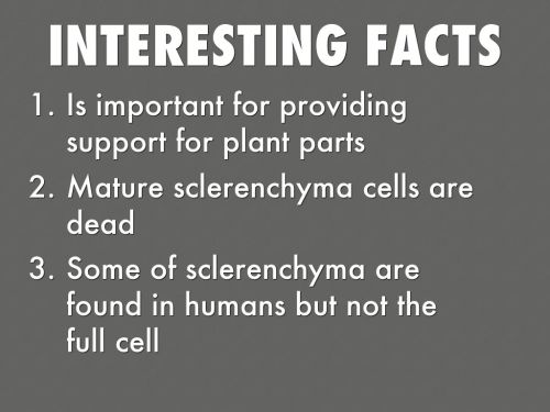 small resolution of interesting facts is important for providing support for plant parts mature sclerenchyma cells