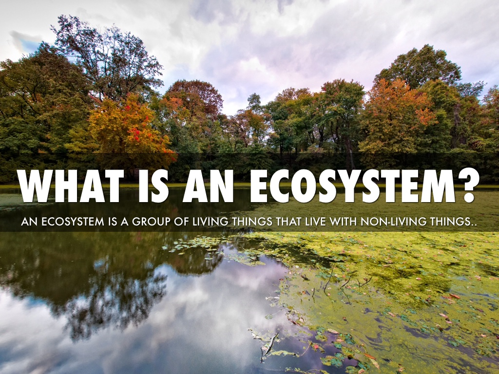 Habitats And Ecosystems By Little John