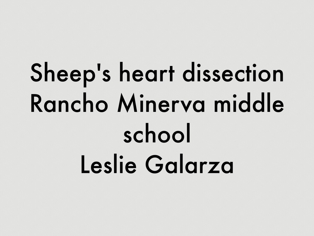 Sheep's Heart Dissection by Leslie Galarza
