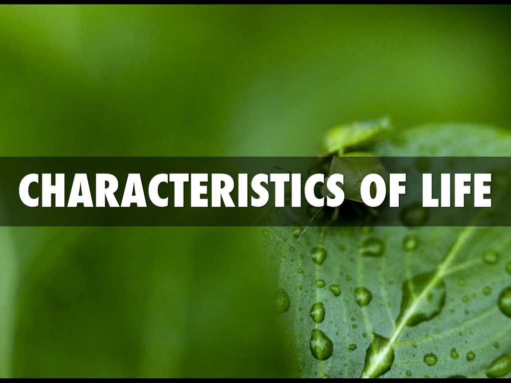 Properties Of Life Research Paper Example