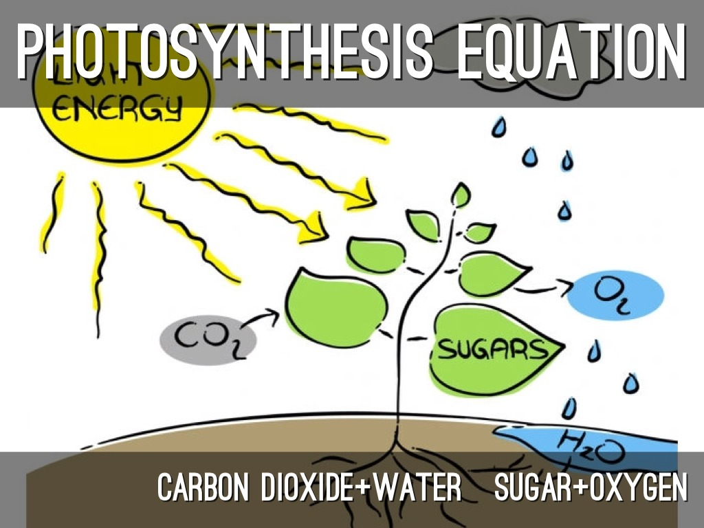 photosynthesis and cellular respiration diagram lotus in water plant project by