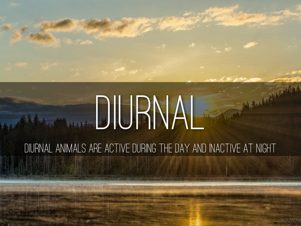 Diurnal Nocturnal And Crepuscular By Emma Lee
