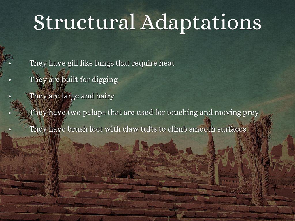 Adaptations Of Desert Organisms By Ilias29