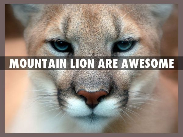Mountain Lion by ctully