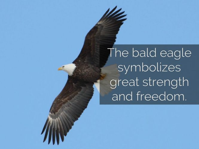 What Does Bald Eagle Symbolize The Best Eagle 2018