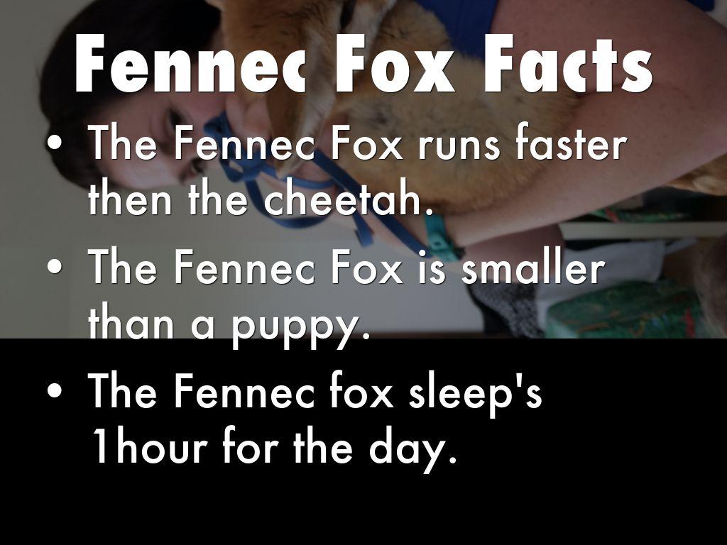 Fennec Fox By Edgar By Lynn Woodhead