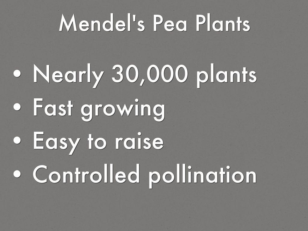 Mendel S Pea Plants By Jennifer Daniel