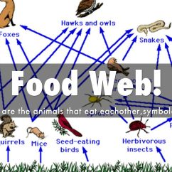 Temperate Forest Food Web Diagram Home Electric Ersatzteile Grassland By 144002483