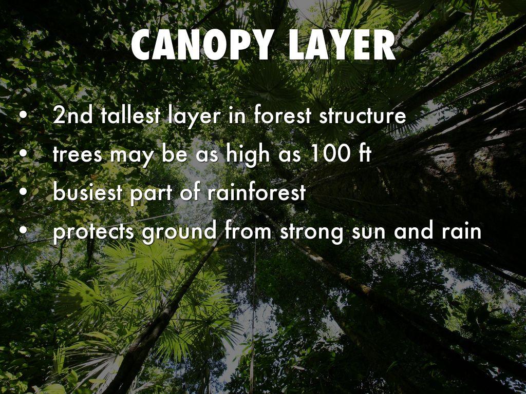 forest canopy diagram dodge ram srt 10 technische daten tropical rainforest by sapeeda a