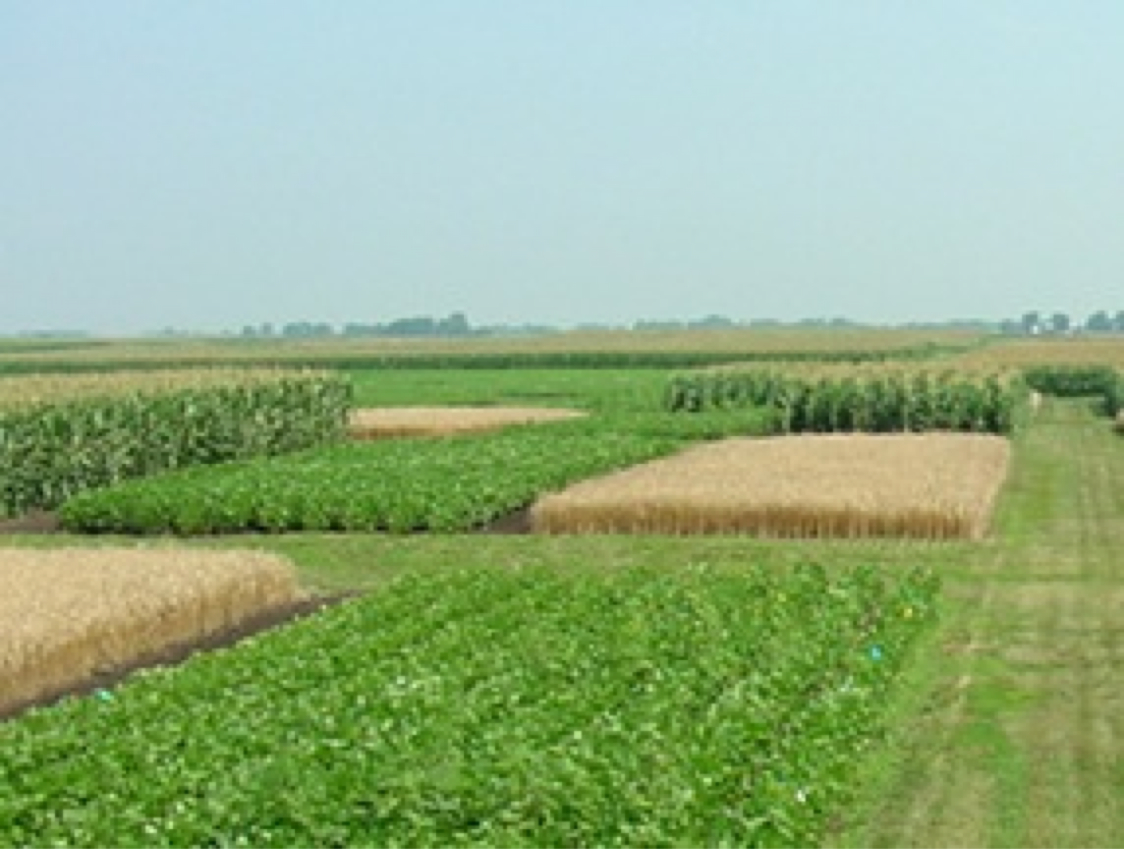 Three Field Crop Rotation