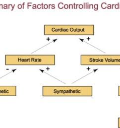 diagram of cardiac output [ 1124 x 768 Pixel ]