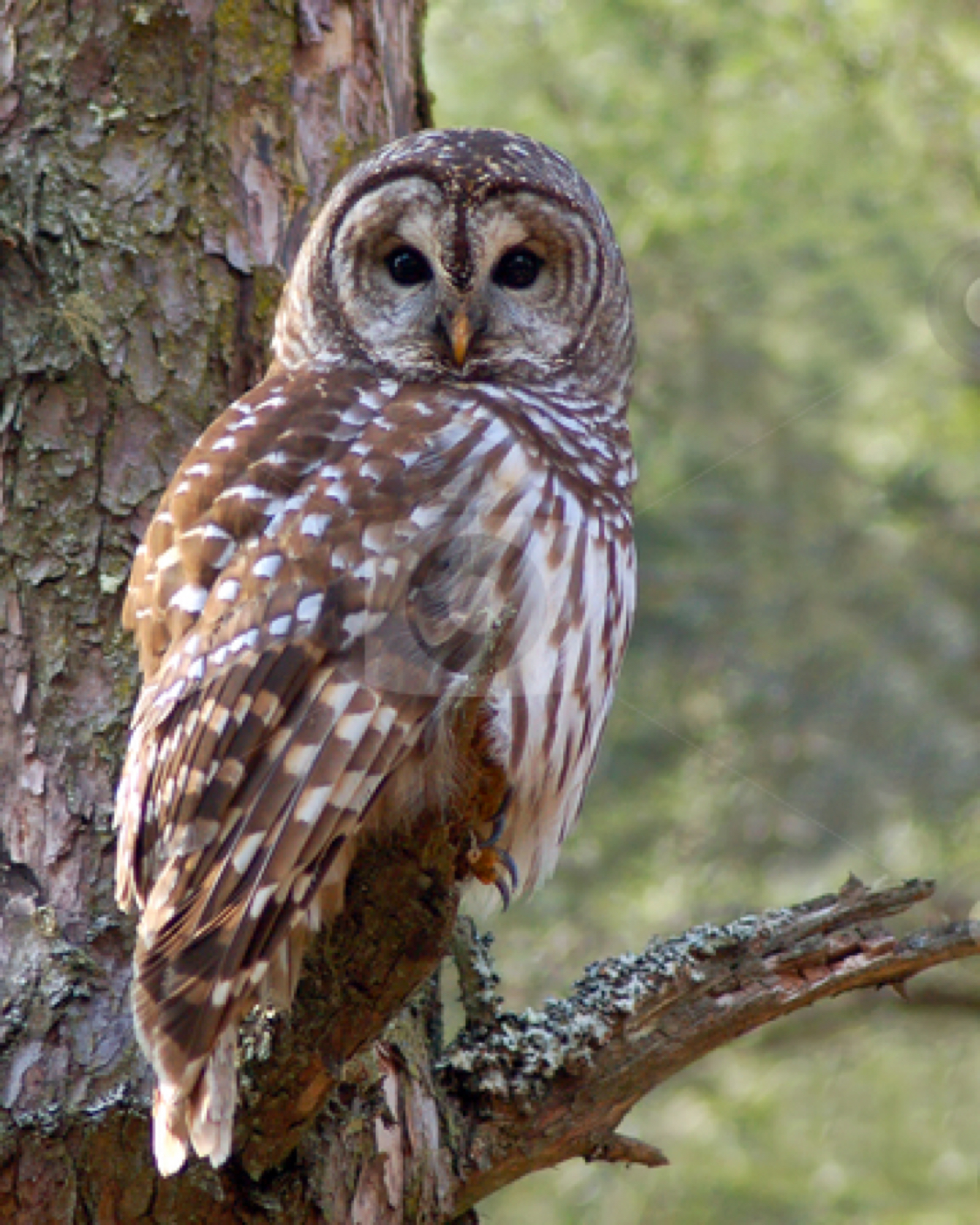 Owls In East Tennessee : tennessee, Tennessee