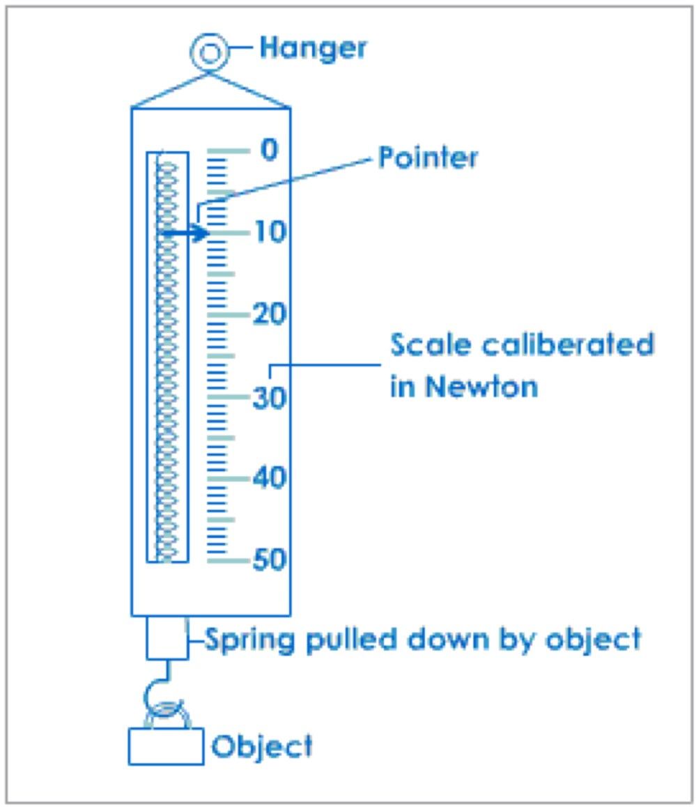 medium resolution of spring scale by lauren petersilia diagram of spring scale