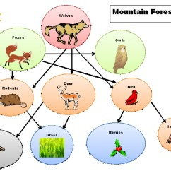 Temperate Forest Food Web Diagram Simple Heart Tropical Dry Biome