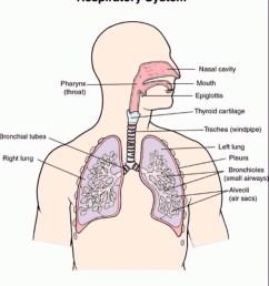 diagram of respiratory system nose [ 1124 x 1264 Pixel ]