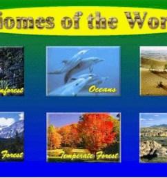 Biomes by Regina Villanueva [ 768 x 1301 Pixel ]