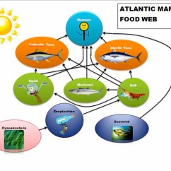 Pacific Ocean Food Web Diagram Electric Guitar Pickup Wiring Atlantic Ecosystem Foodfash Co