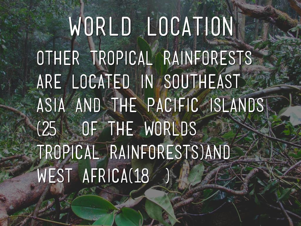 Tropical Rainforest Presentation By Olivia Corner