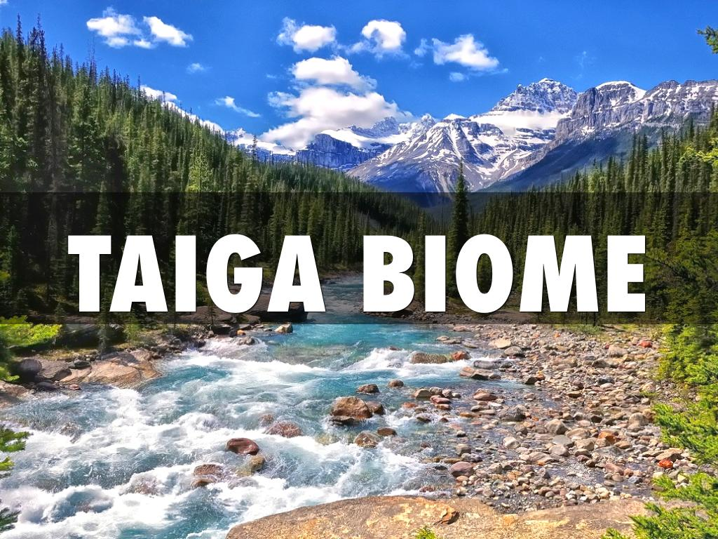 taiga biome by allister