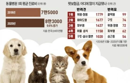 12 만원 내고 병원비 4 억 6500 만원 … 애완 동물 보험 인기